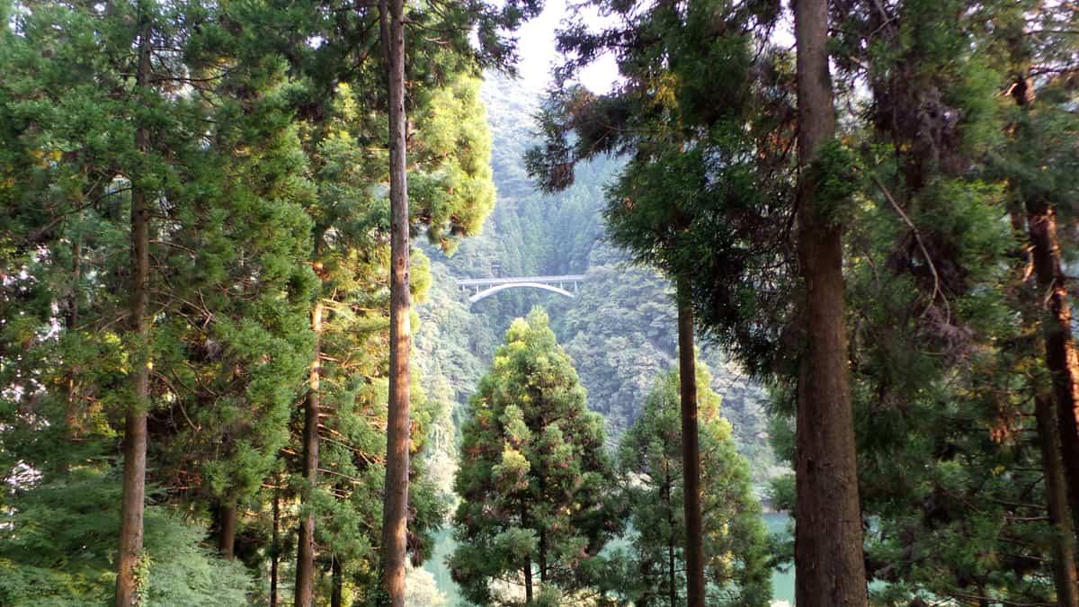Kyūshū : « forêt-thérapie » dans le parc naturel de Yabegawa
