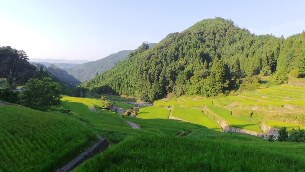 Top 10 Kyūshū : les rivières en terrasse d'Ukiha