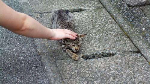 Caresse d'un chaton sur l'île d'Ainoshima