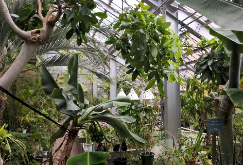 Serres tropicales du jardin botanique de Sapporo, Hokkaido, Japon.