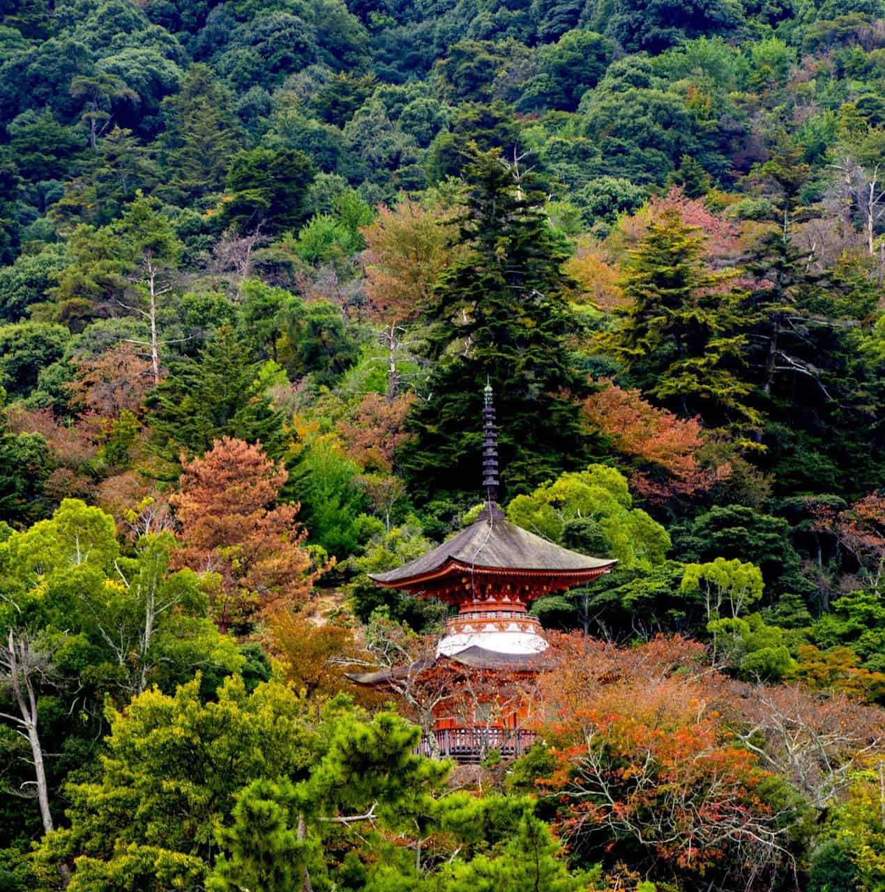 L'île de Miyajima en automne, la saison du koyo