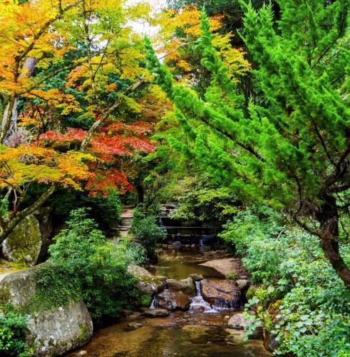 Parc Momijidani pendant koyo, île de Miyajima, Japon.