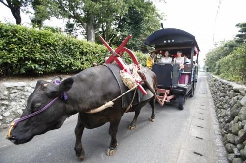 il est également possible de réserver une visite guidée du quartier en carriole tirée par un bœuf.