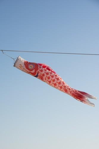 La carpe rouge representant la mère pendant le festival des enfants Kodomo No Hi à Tatebayashi