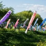 Le Kodomo No Hi, plus de 5000 carpes pour le fête des enfants à Tatebayashi
