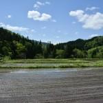 Murakami : planter du riz et dormir dans une famille d'agriculteurs au Japon