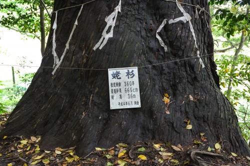 les arbres parfois très vieux sur le chemin du temple Hakogata Hachimangu Shaso à Gatsugi dans la préfécture de Niigata