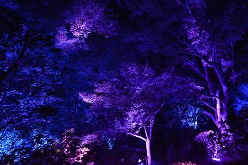 Le jardin Mifuneyama Rakuen à Takeo Onsen, dans la préfecture de Saga avec l'exposition A forest where Gods Live de teamLab