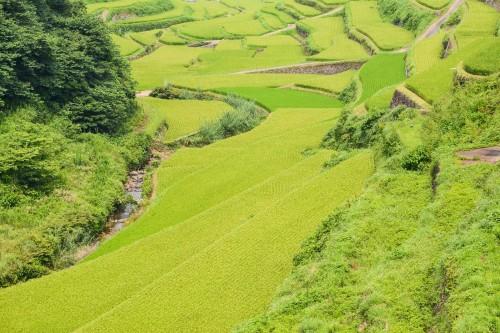 Les rizières en terrasse Hamanoura no Tanada dans la préfecture de Saga, sur l'île de Kyshu au Japon