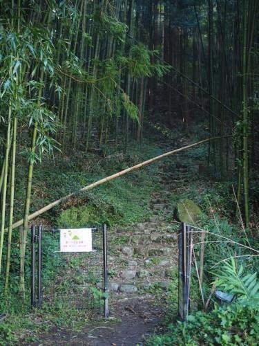 Une vue sur les rizières depuis l'observatoire de Yuhi Kan-non à Oita, Kyushu