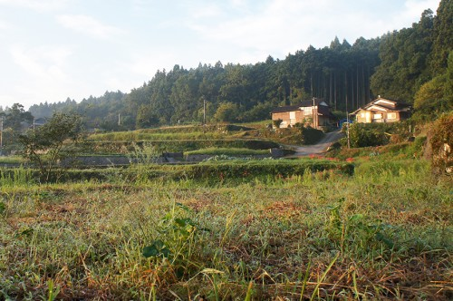 Paysage de la campagne de kunisaki : champs et maison