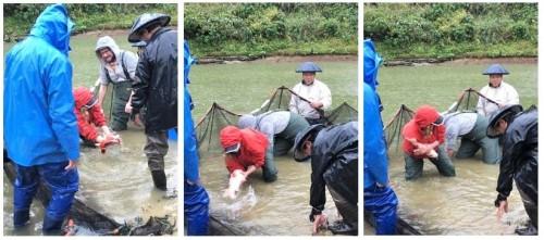 Yamakoshi, écotourisme, agriculture, Japon, Niigata, pêche