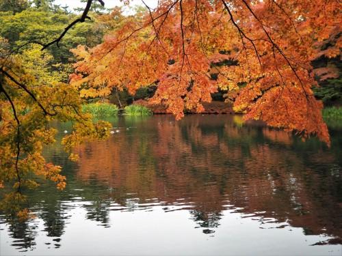 Karuizawa, montagne, nagano, shinkansen, automne, étang kumoba