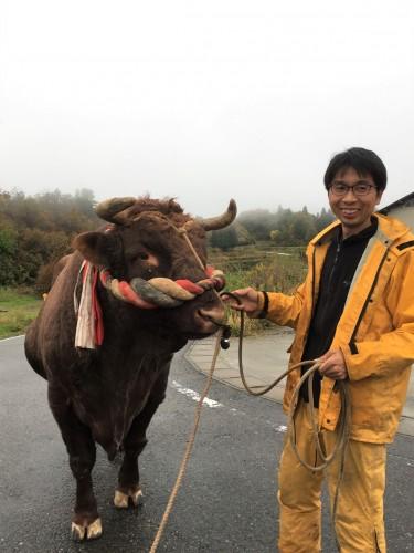 Yamakoshi, écotourisme, agriculture, Japon, Niigata, taureau, culte