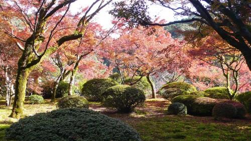 Découverte automnale du jardin de Kunenan, Saga, Kyushu, Japon.
