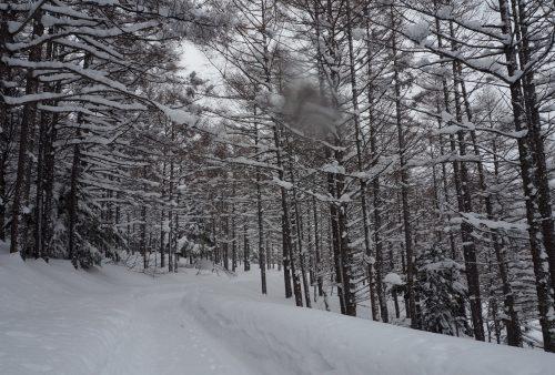 Shiga Kogen, Nagano, Station de ski, Japon, neige