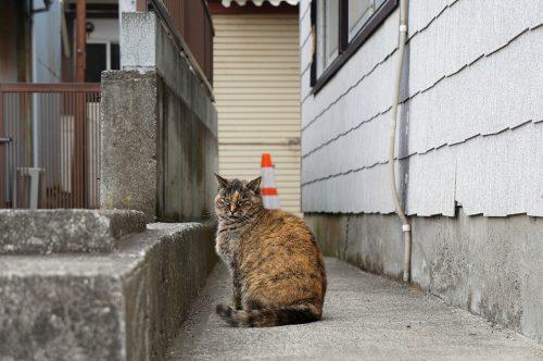 Ryokan Ebisuya, Enoshima, Japon, chat