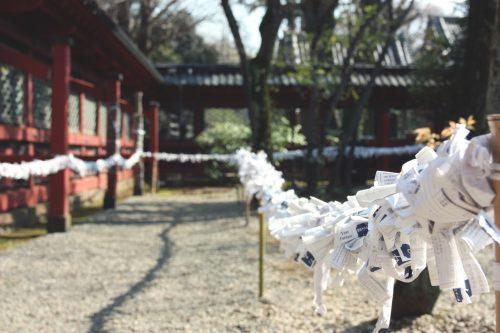 Tsutsuji Matsuri, Azalées, Sanctuaire Nezu-jinja,Tokyo, floraisons