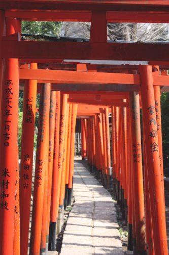 Tsutsuji Matsuri, Azalées, Sanctuaire Nezu-jinja,Tokyo, torii