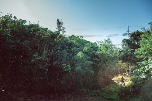 La végétation dense sur l'île de Taketomi dans la Préfecture d'Okinawa, Japon