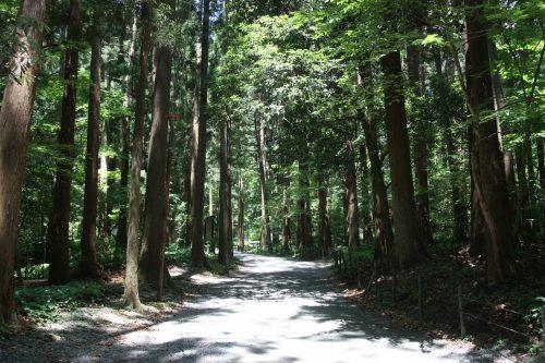 Chemin menant au sommet du Mont Yahiko aux alentours d'Iwamuro, près de Niigata au Japon