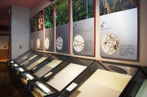 Différents types de Tosa Washi au Musée du Papier Tosa Washi dans la Préfecture de Kochi, Japon
