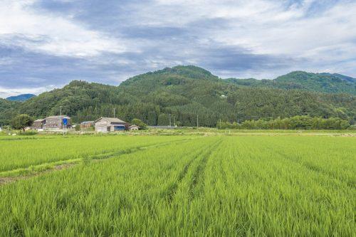 Les rizières entourant l'auberge Goushikan près de Murakami dans la préfecture de Niigata, Japon