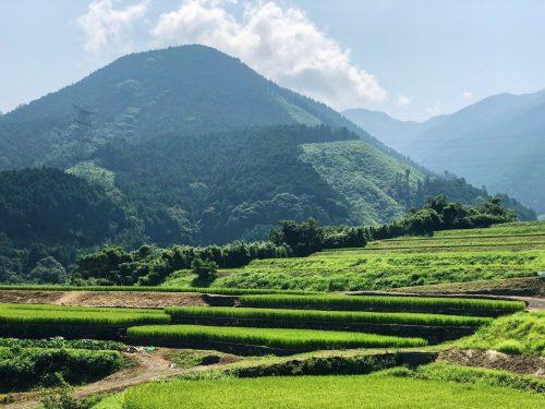 Rizières en terrasse à Toon, préfecture d'Ehime, Japon