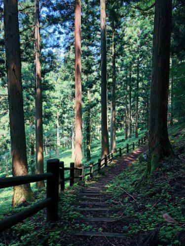 Sentier dans la montagne Saragamine près de Toon, Ehime, Japon