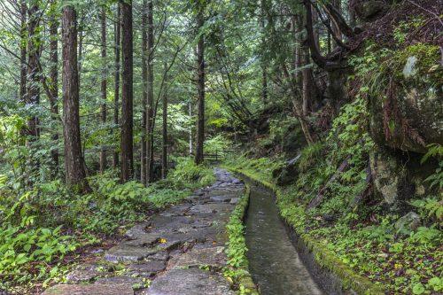 Sentier de randonnée dans le parc Yumori à Nakatsugawa, préfecture de Gifu, Japon