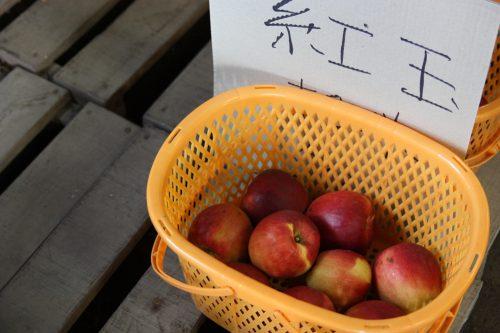 Pommes récoltées sur le Mt Daisen dans la préfecture de Tottori, Japon