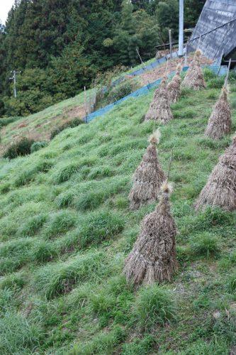 Champs à flanc de montagne dans le hameau d'Ochiai, vallée d'Iya, Tokushima, Shikoku, Japon