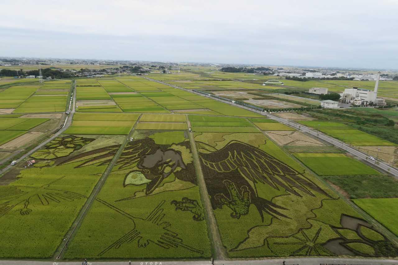 Des rizières transformées en œuvres de Tambo Art à Gyoda, Saitama