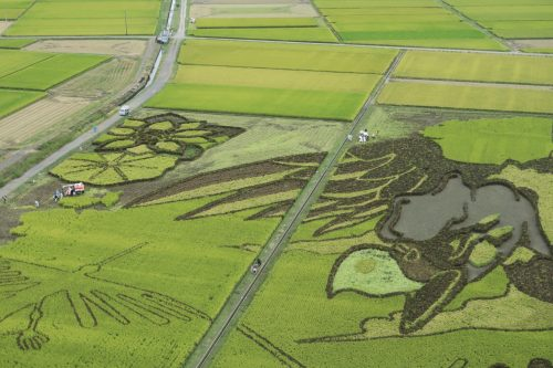 Tambo Art à Gyoda, préfecture de Saitama, Japon