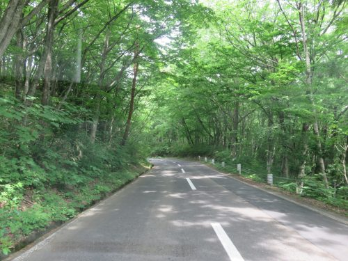 Route tranquille dans la forêt pour faire un balade à vélo à Tazawako, Akita, Japon
