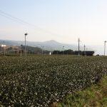 À la découverte d'Higashisonogi : thé vert, écotourisme, nature cachée et bonnes adresses