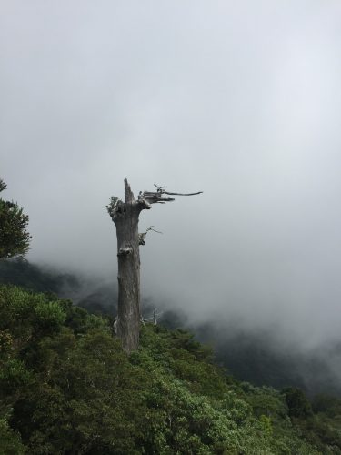 Vue depuis Taikoiwa, la forêt est recouverte de brume, sur l'île de Yakushima, Japon
