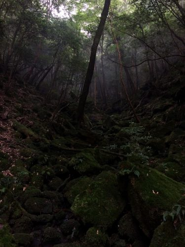Chemin recouvert de mousse dans Shiratani Unsuikyo sur l'île de Yakushima, Japon