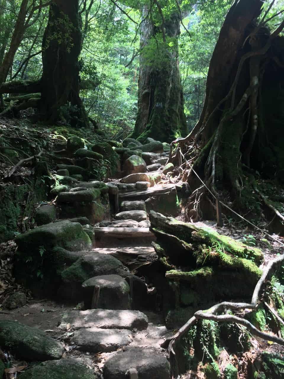 Ile de Yakushima : randonnée dans les gorges de Shiratani Unsuikyo