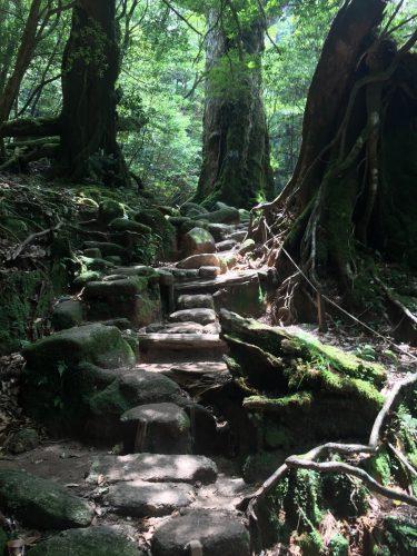 Chemin pavé de grosses pierres entre les cèdres de Shiratani Unsuikyo, île de Yakushima, Japon