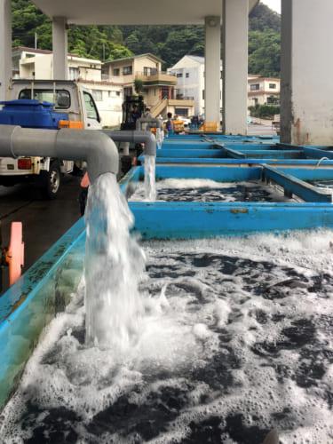 Bacs à poissons sur le port de Kamae
