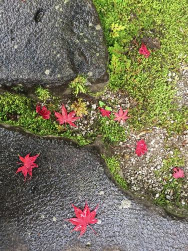 Feuilles d'érable rouges sur le sol du jardin japonais du Kyushintei, Saiki