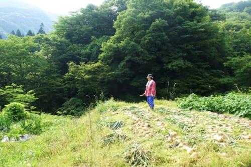 Paysage rural de montagne près du Minshuku Maroudo, à Takachiho, Miyazaki, Kyushu