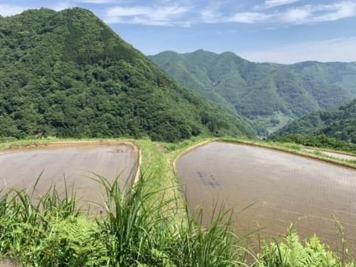 Rizières dans un paysage de montagne Minshuku Maroudo, à Takachiho, Miyazaki, Kyushu