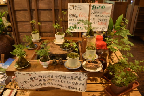 Petites plantes en pot, vendues dans la maison d'hôte par les enfants de la famille