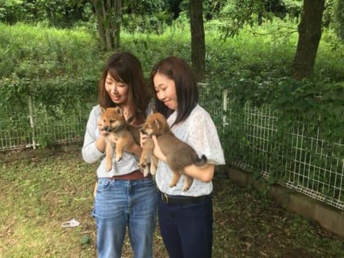 Deux jeunes japonaises portant des chiots shiba inu dans leurs bras