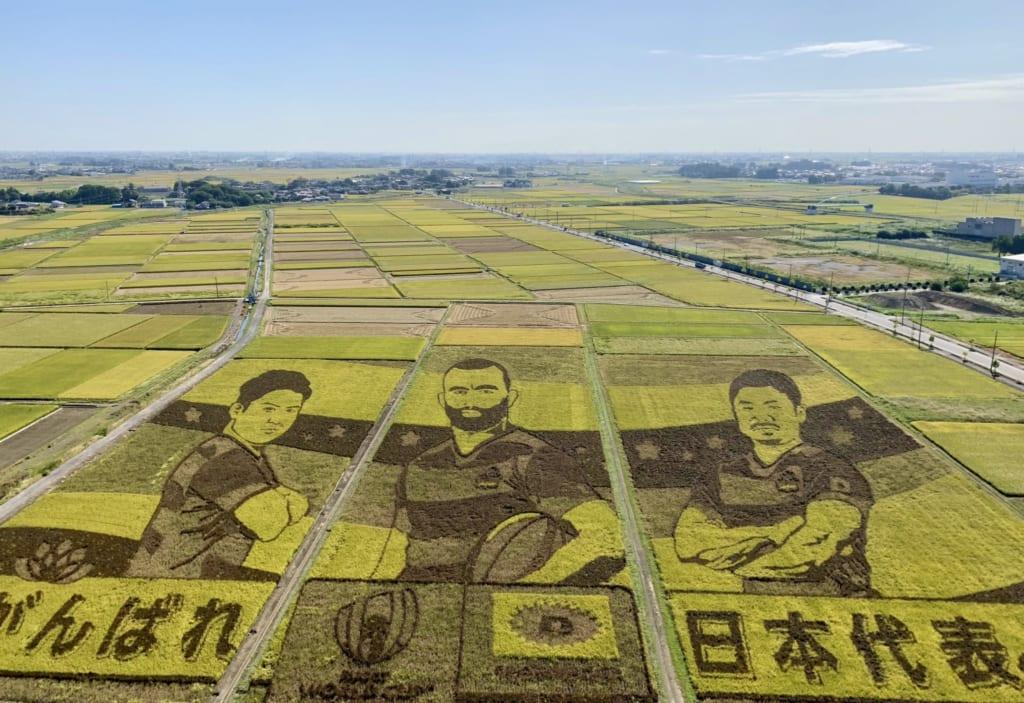 Les rizières de la ville de Gyoda décorées aux motifs de la coupe du monde de rugby