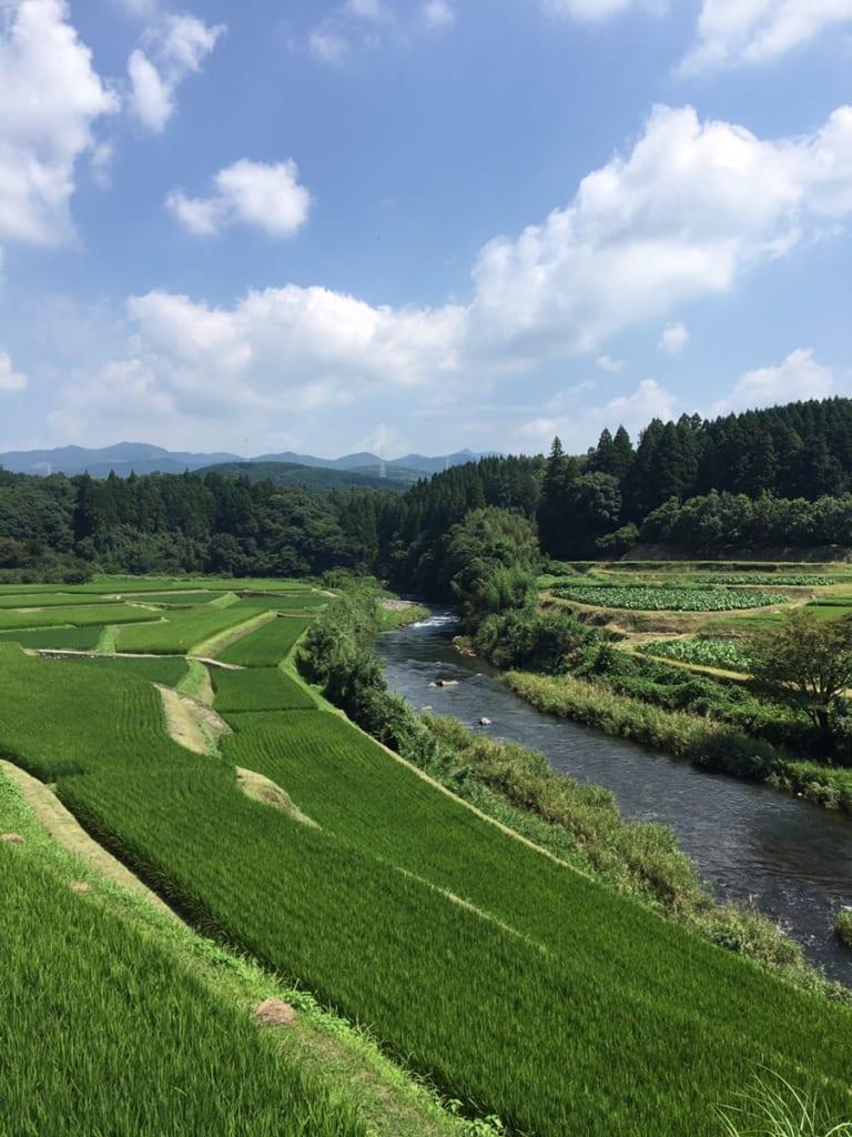 Rivière passant au milieu des rizières de Kikuchi, au nord de Kumamoto