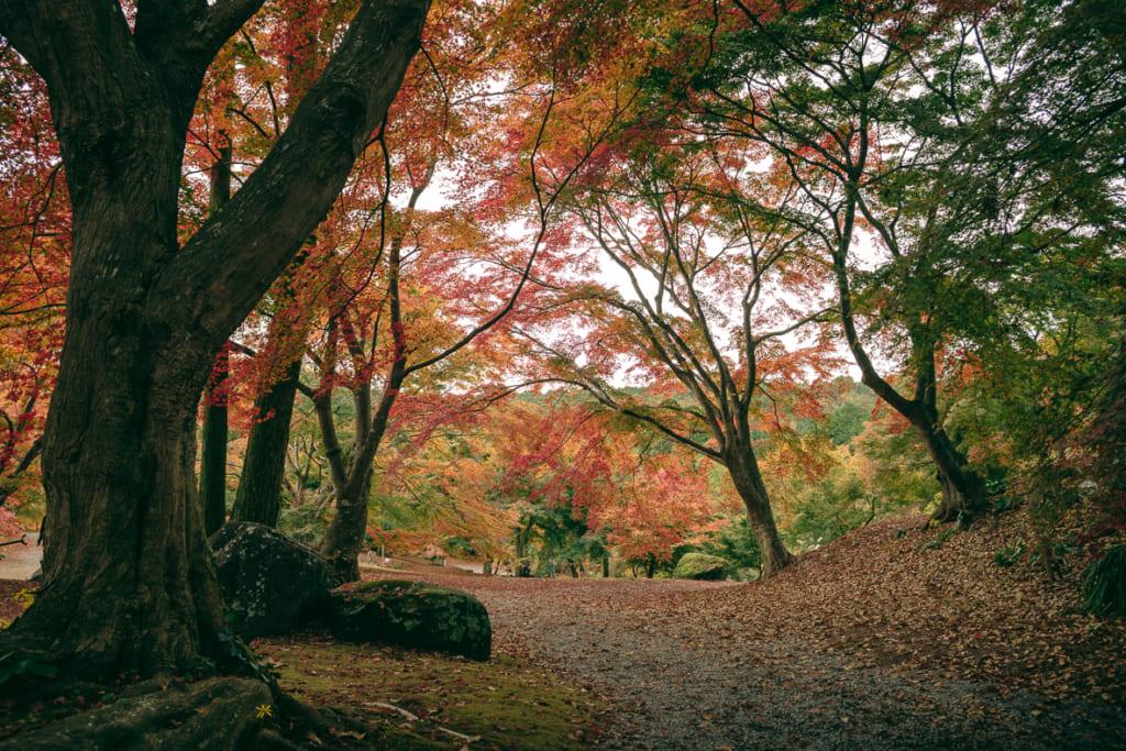 Les magnifiques érables du Misojien Garden, dans la préfecture de Nagasaki