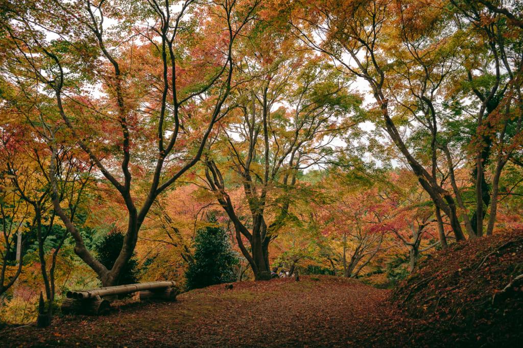 Un banc sous les arbres aux couleurs de l'automne dans le Misojien Garden à Nagasaki